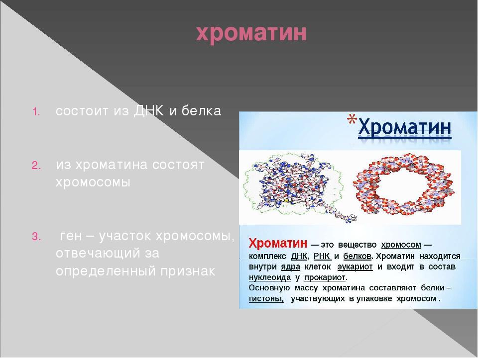 хроматин. хромосома