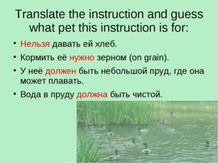 Translate the instruction and guess what pet this instruction is for: Нельзя