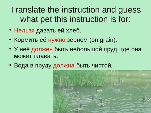 Translate the instruction and guess what pet this instruction is for: Нельзя...