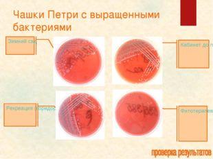 Чашки Петри с выращенными бактериями Кабинет до проведения уборки Фитотерапев