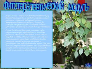 Параллельно с изучением фитотерапевтических свойств растений, была проведена