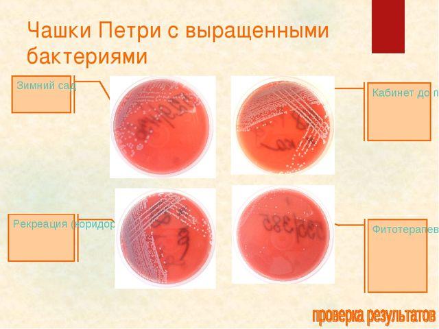 Чашки Петри с выращенными бактериями Кабинет до проведения уборки Фитотерапев...