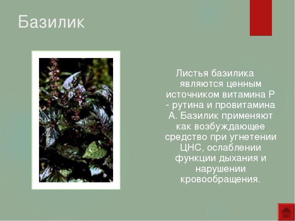 Базилик Листья базилика являются ценным источником витамина Р - рутина и пров...