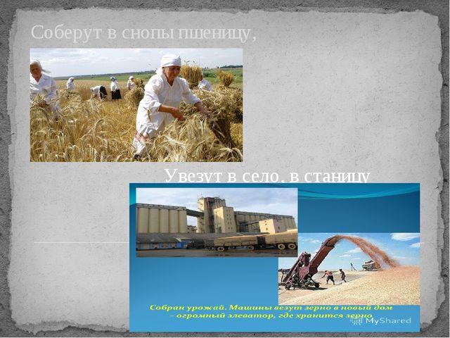 Соберут в снопы пшеницу, Увезут в село, в станицу