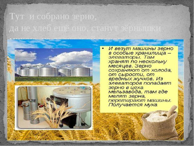 Тут и собрано зерно, да не хлеб ещё оно, станут зёрнышки мукою, не дадут и ей...