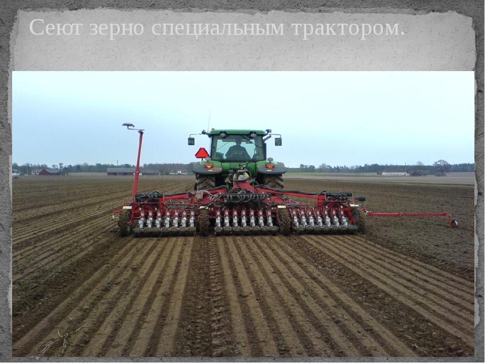 Сеют зерно специальным трактором.