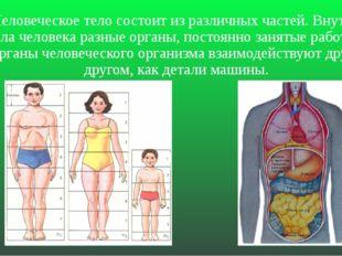 Человеческое тело состоит из различных частей. Внутри тела человека разные ор