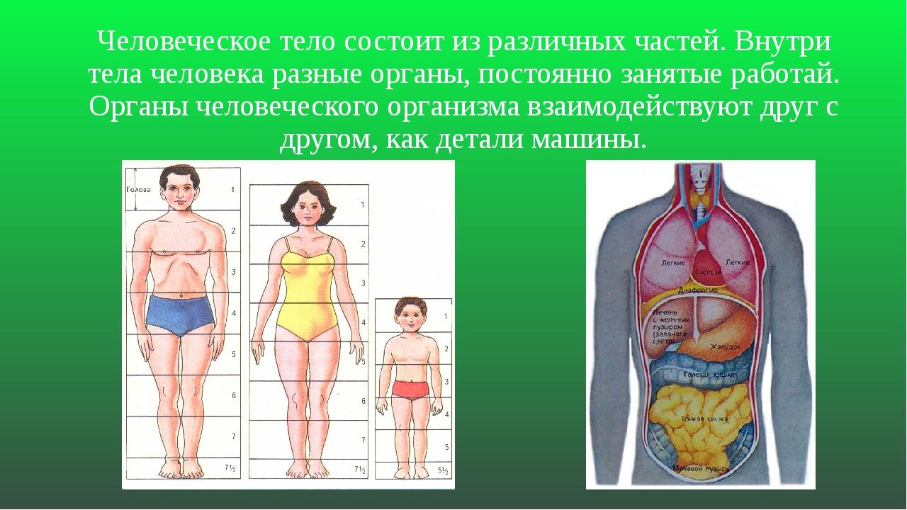 Человеческое тело состоит из различных частей. Внутри тела человека разные ор...