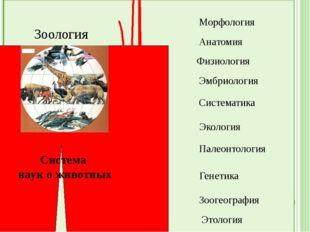 Зоология Система наук о животных Морфология Анатомия Физиология Эмбриология