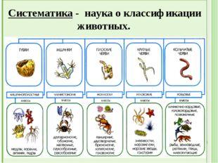 - наука о классификации животных Систематика - наука о классификации животных.