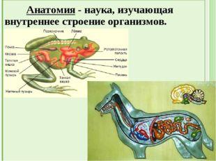 Экология животных - наука, изучающая взаимоотношения между организмами и со