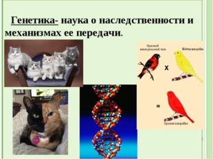 Зоогеография- наука о распространении животных