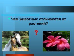2. Животные питаются готовыми органическими веществами. Они гетеротрофы