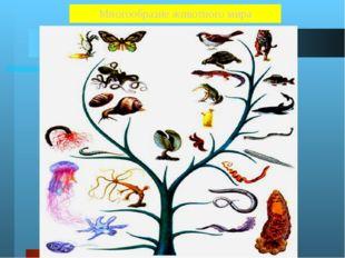 Животные Около 2 000 000 видов Земноводные 2 600 Черви 32 000 Пресмыкающиеся