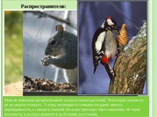 Значение животных для человека: Животноводство — содержание и разведение кру