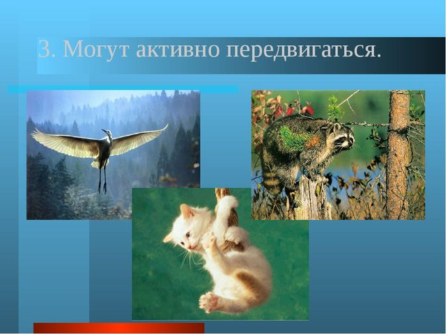 В наше время известно около 2 млн. видов животных