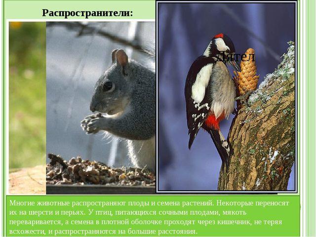Значение животных для человека: Животноводство — содержание и разведение кру...