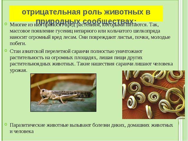 Вывод: Современная зоология– это система наук, имеющих важное теоретическое...