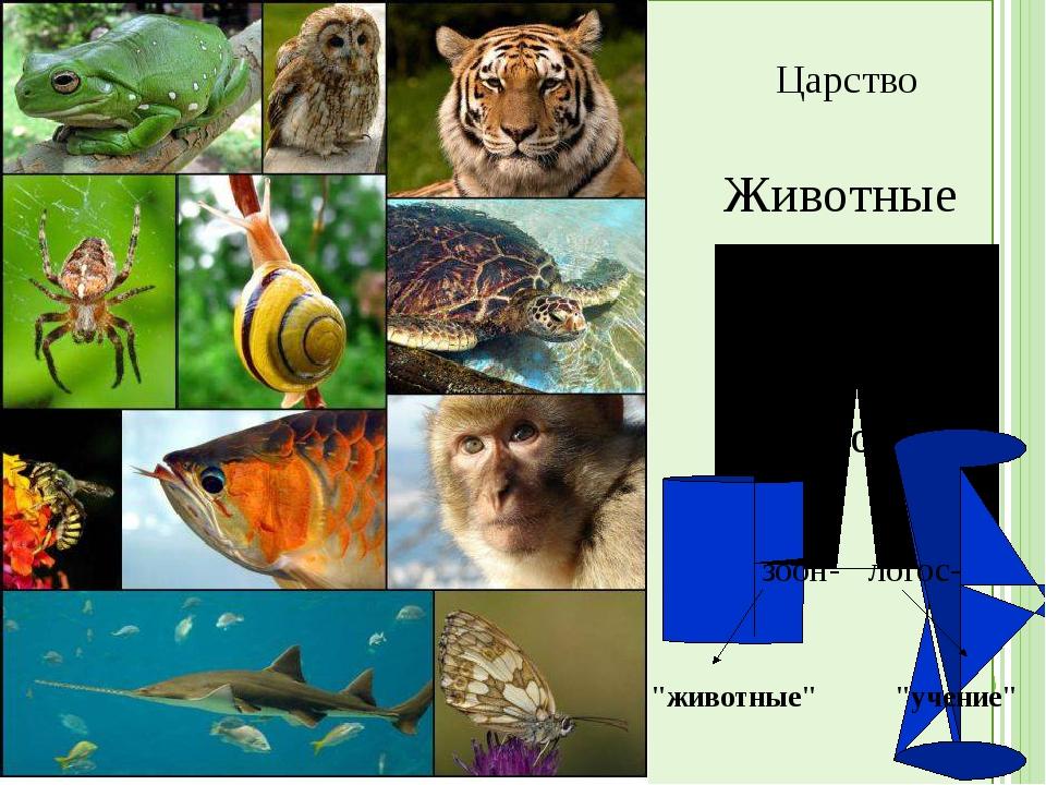 """Царство Животные Зоология зоон- логос- """"животные"""" """"учение"""""""
