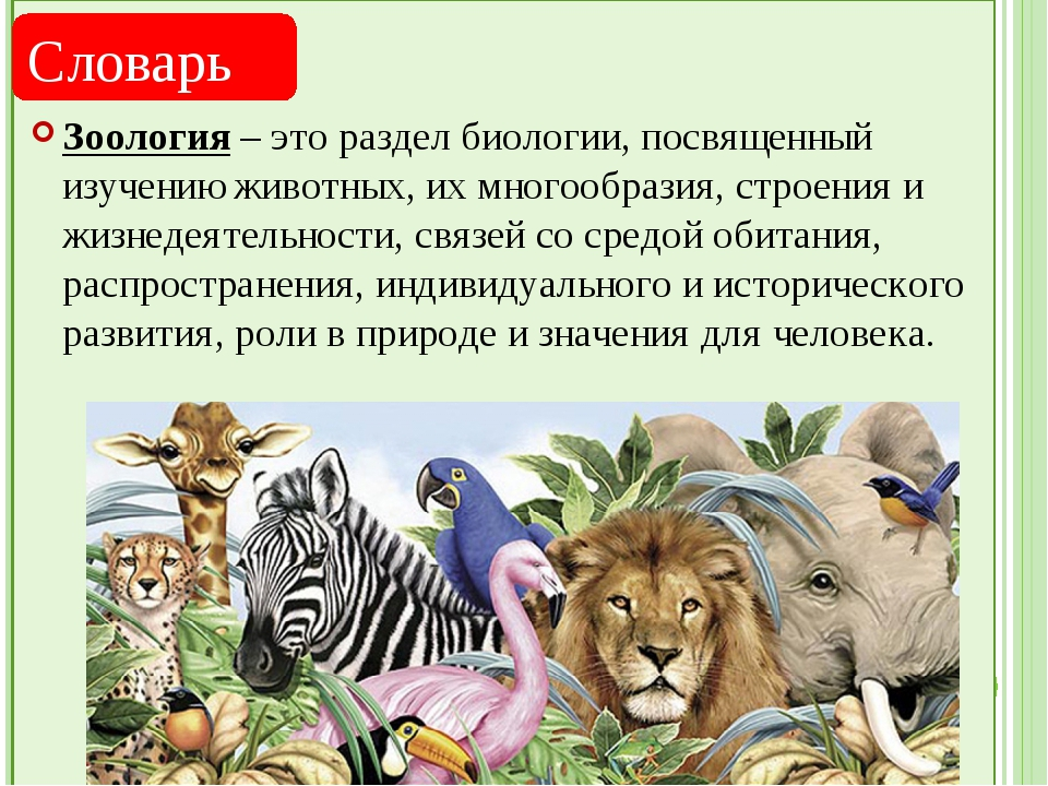 Зоология – это раздел биологии, посвященный изучению животных, их многообраз...