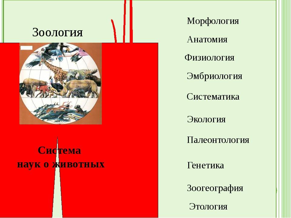 Зоология Система наук о животных Морфология Анатомия Физиология Эмбриология...