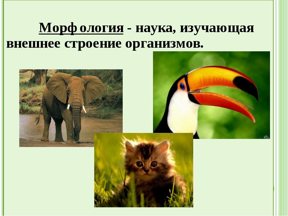 Морфология - наука, изучающая внешнее строение организмов.