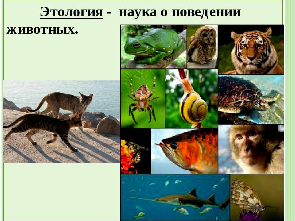 Сходство животных и растений: Клеточное строение Питание Дыхание Выделение О...