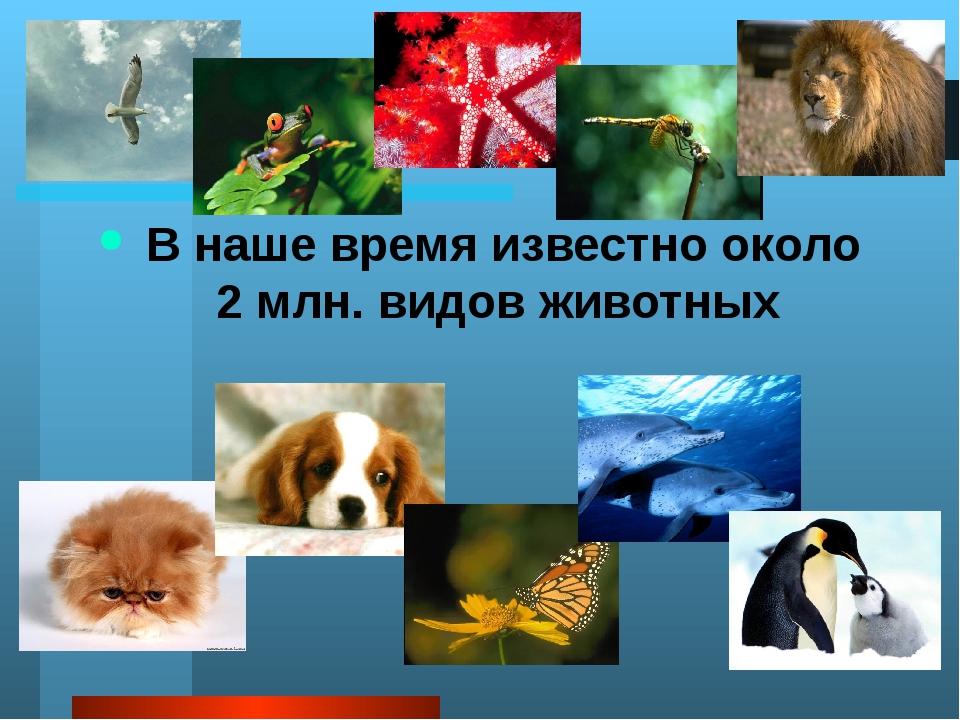 А много ли животных вы знаете ребята? Какие из этих животных обитают в Росси...