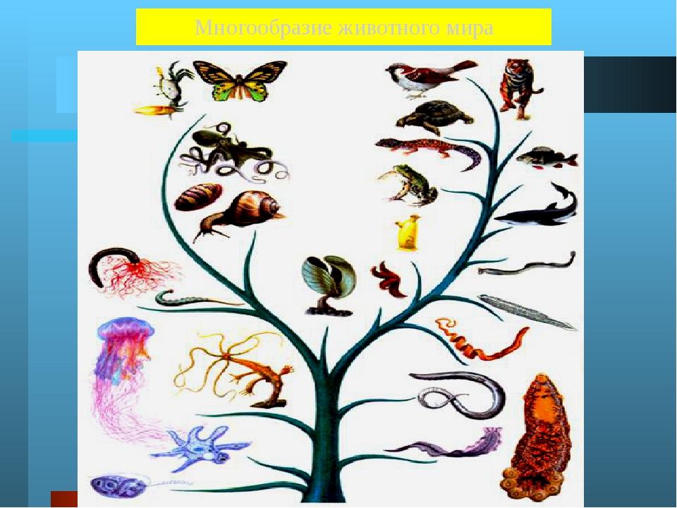 Животные Около 2 000 000 видов Земноводные 2 600 Черви 32 000 Пресмыкающиеся...