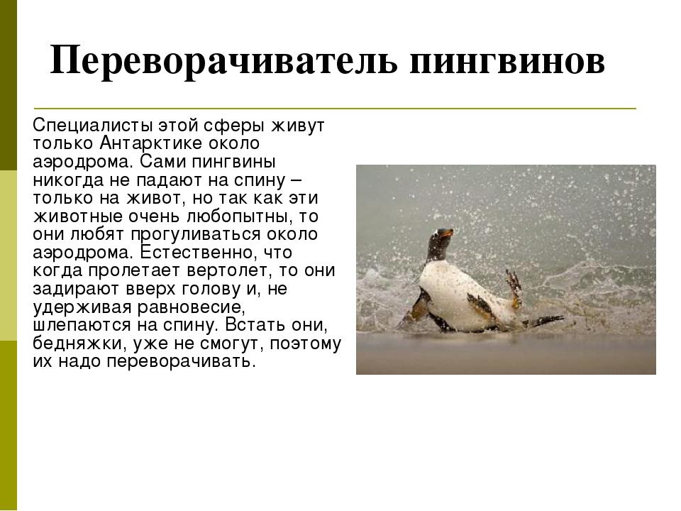 Переворачиватель пингвинов Специалисты этой сферы живут только Антарктике ок...