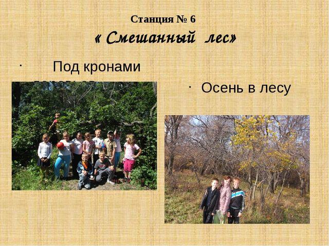 Станция № 6 « Смешанный лес» Под кронами деревьев Осень в лесу