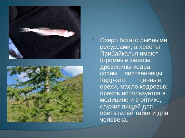 Озеро богато рыбными ресурсами, а хребты Прибайкалья имеют огромные запасы д...
