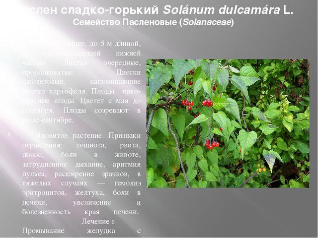 Паслен сладко-горький Solánum dulcamáraL. Семейство Пасленовые (Solanaceae)...