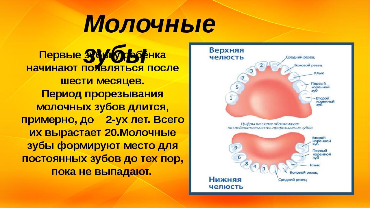 Молочные зубы Первые зубы у ребёнка начинают появляться после шести месяцев....