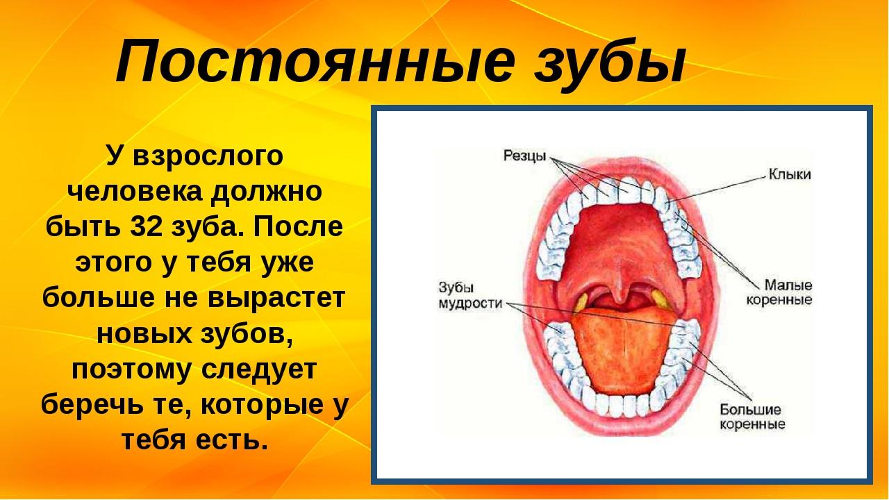 У взрослого человека должно быть 32 зуба. После этого у тебя уже больше не вы...