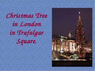 Christmas Tree in London in Trafalgar Square.