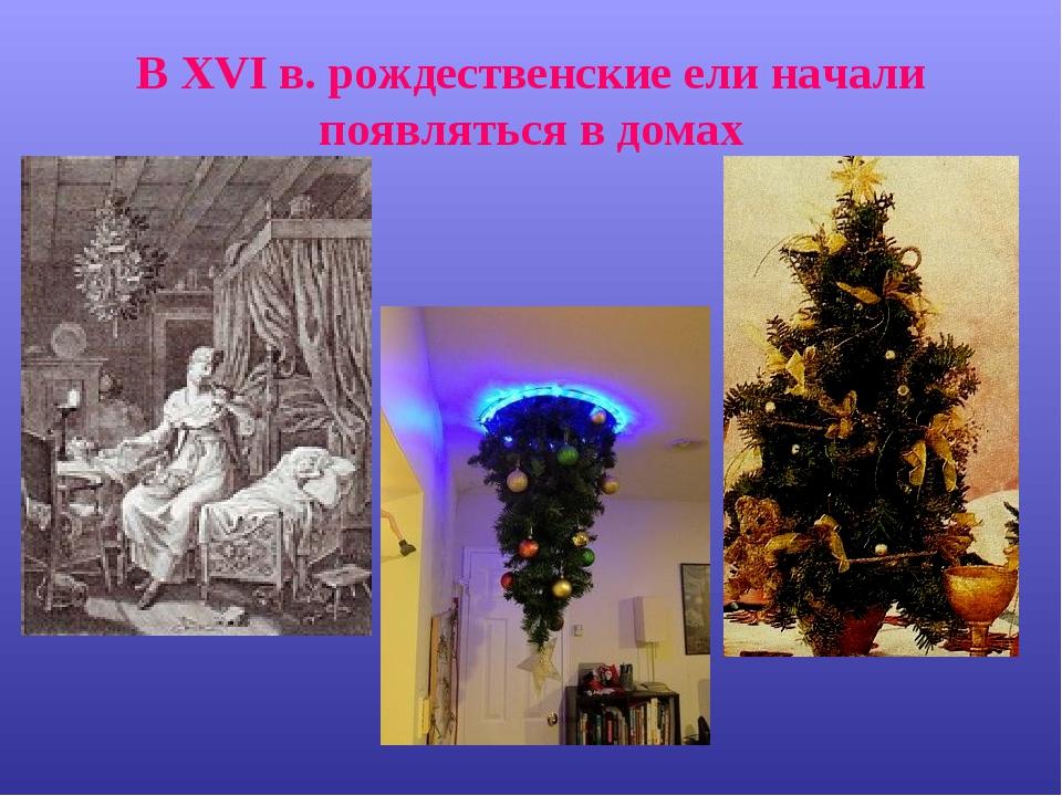 В XVI в. рождественские ели начали появляться в домах