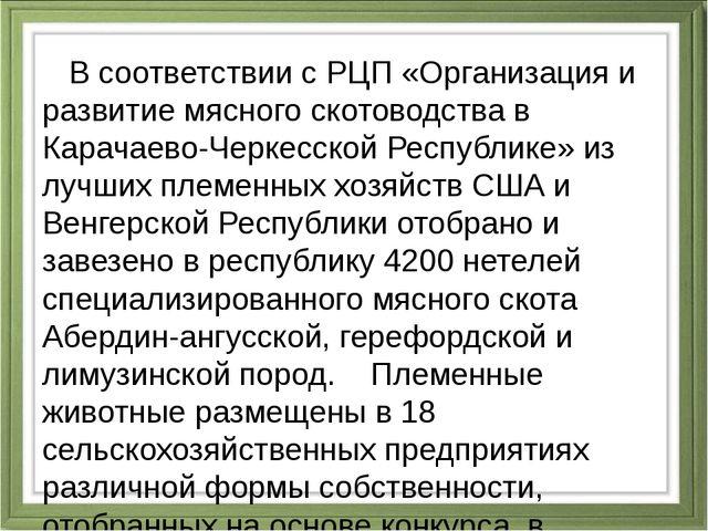 В соответствии с РЦП «Организация и развитие мясного скотоводства в Карачаев...