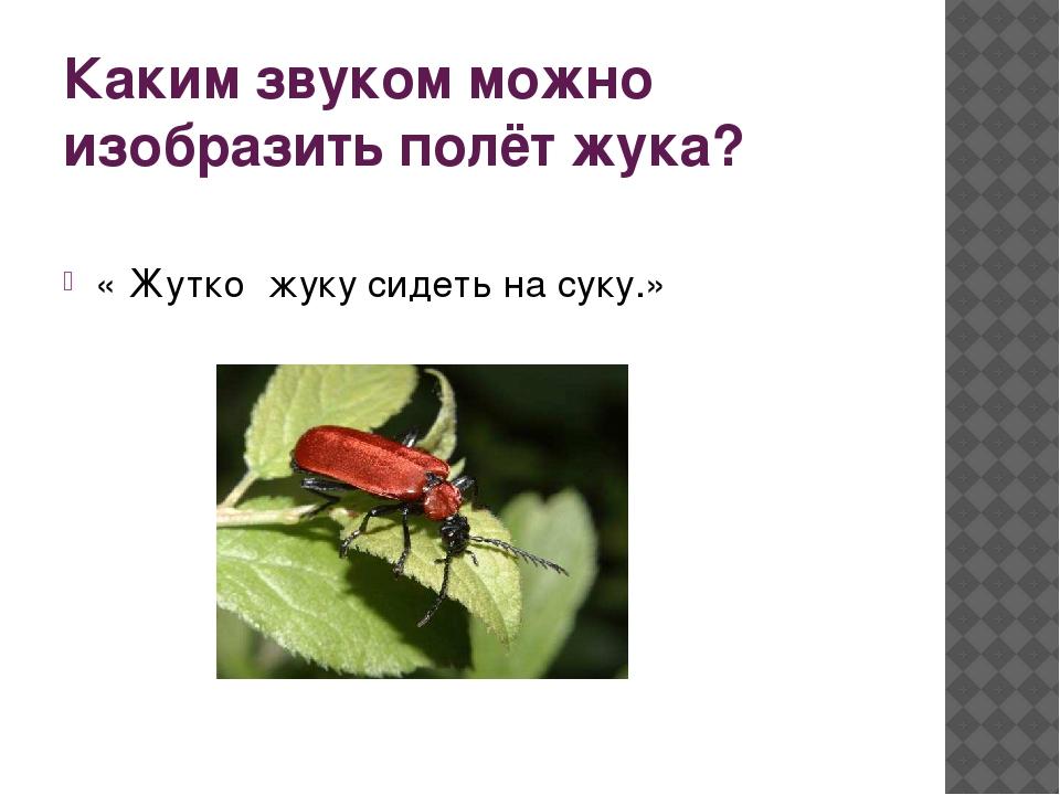 Каким звуком можно изобразить полёт жука? « Жутко жуку сидеть на суку.»