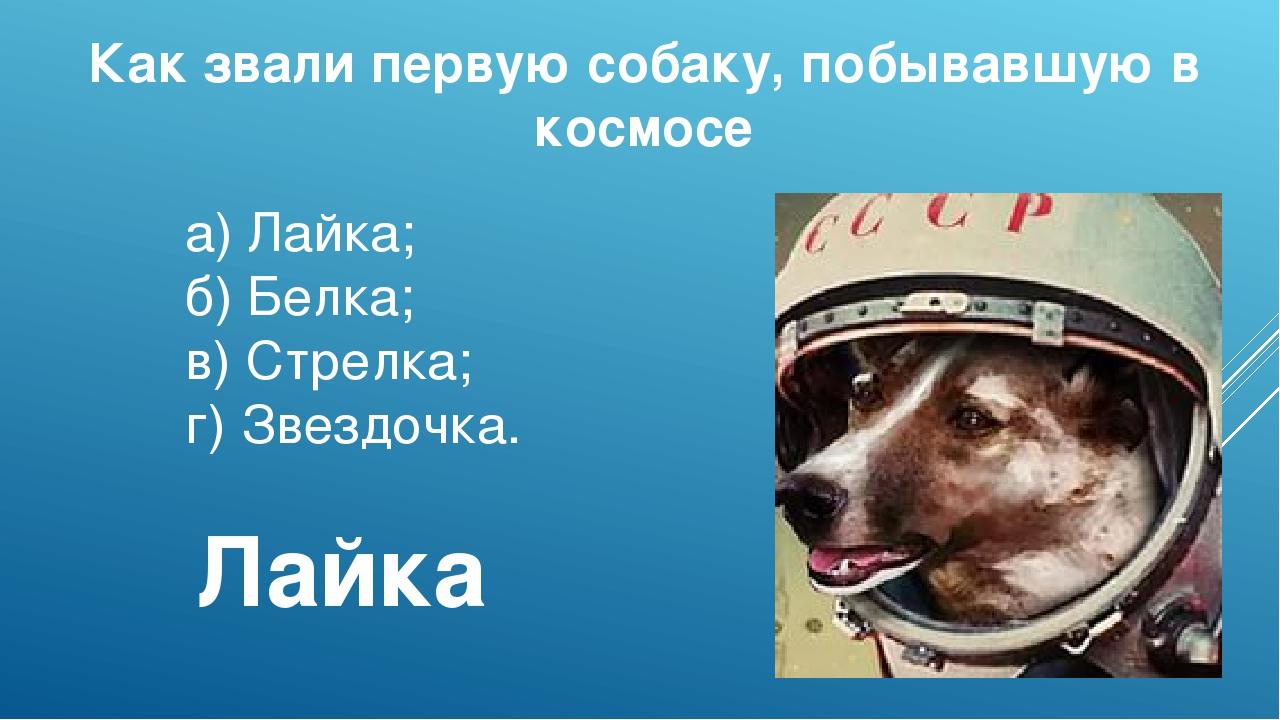 Как звали первую собаку, побывавшую в космосе а)Лайка; б)Белка; в)Стрелка;...