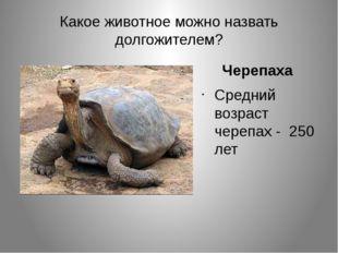 Какое животное можно назвать долгожителем? Черепаха Средний возраст черепах -