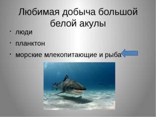 Любимая добыча большой белой акулы люди планктон морские млекопитающие и рыба