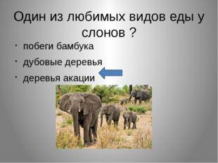 Один из любимых видов еды у слонов ? побеги бамбука дубовые деревья деревья а
