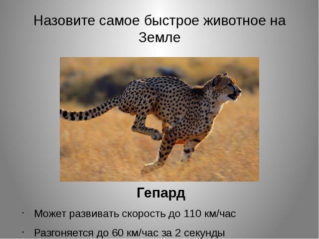 Назовите самое быстрое животное на Земле Гепард Может развивать скорость до 1...