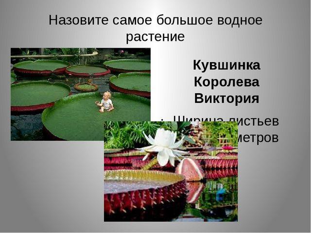 Назовите самое большое водное растение Кувшинка Королева Виктория Ширина лист...