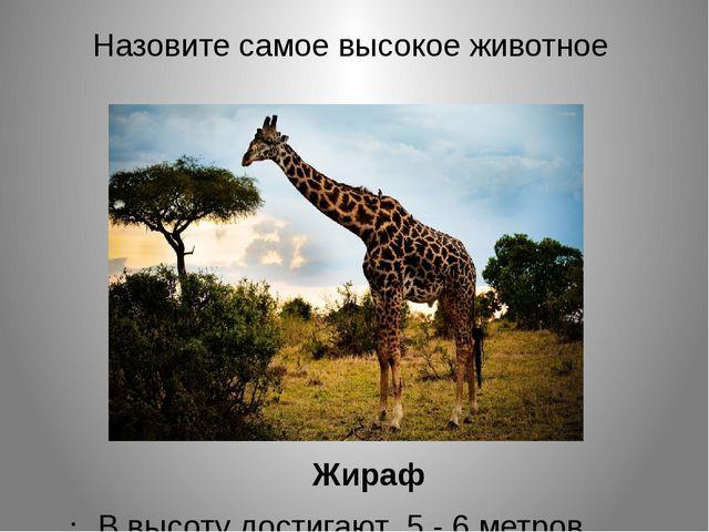 Назовите самое высокое животное Жираф В высоту достигают 5 - 6 метров