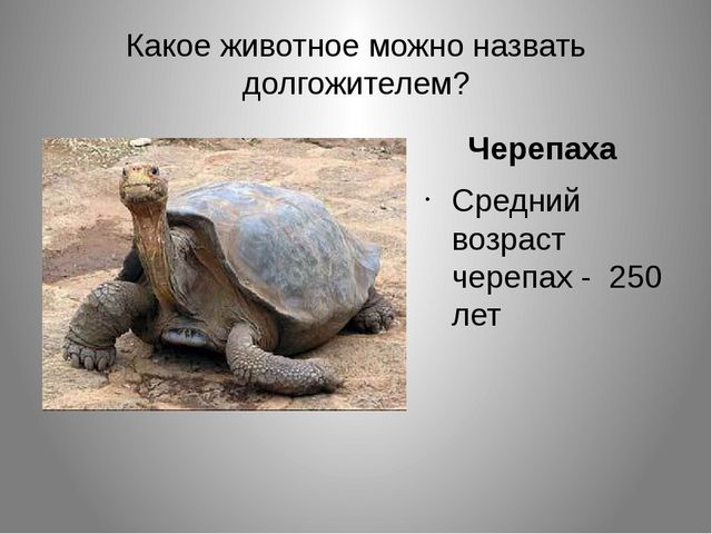 Какое животное можно назвать долгожителем? Черепаха Средний возраст черепах -...