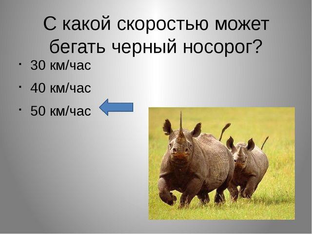 С какой скоростью может бегать черный носорог? 30 км/час 40 км/час 50 км/час