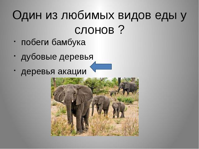 Один из любимых видов еды у слонов ? побеги бамбука дубовые деревья деревья а...