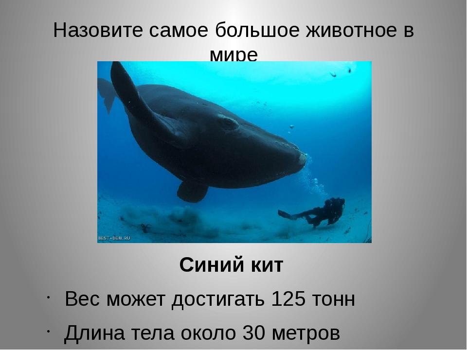 Назовите самое большое животное в мире Синий кит Вес может достигать 125 тонн...
